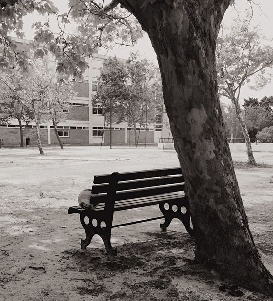 A tree and a bench Docsaude Cascais E Estoril EyeEm Best Shots Photooftheday Portugal Photo Tree_collection  Trees Blackandwhite Photography Black & White