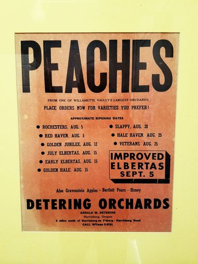 Peaches Signage Orchard Oregon
