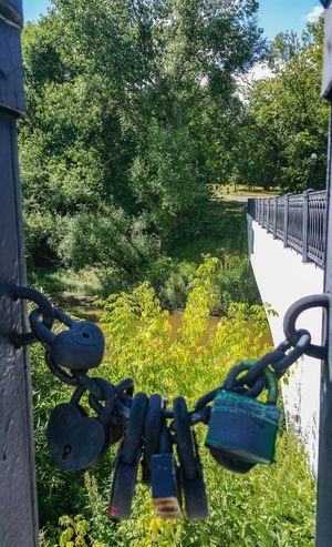 Metal Tradition Traditional Railing Wedding Protection Green Summer Locks River Built Structure Park Travel Destinations Russia Яуза Москва City Life Tree Water No People Day City река Landscape Moscow