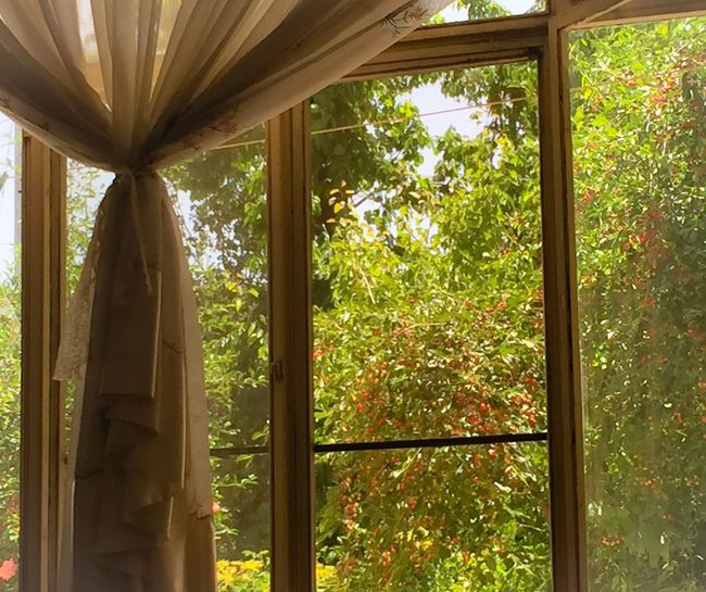 Architecture Beauty In Nature Curtain Leaf Low Angle View Nature Tranquility Tree Window