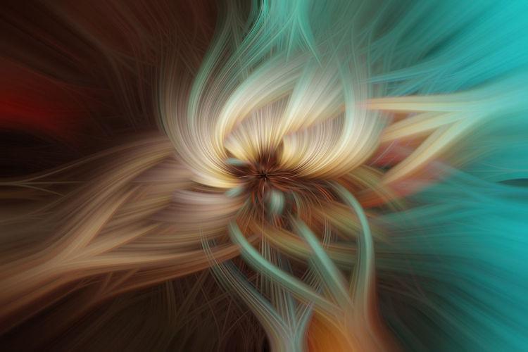 Full frame shot of illuminated flower