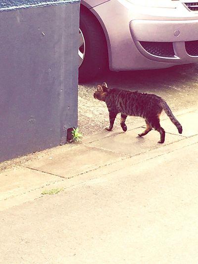 Cat Cat♡ Cats Ranaway Animals
