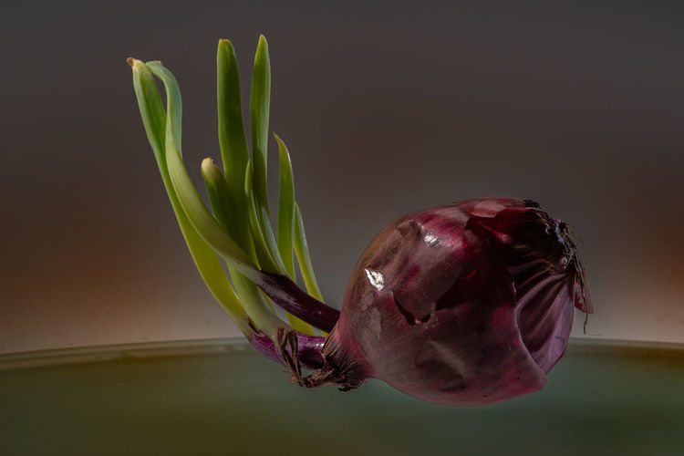 Dramatic Onion Close-up No People Vegetable Indoors  Plant Food And Drink Food Onion Nature Still Life Red Focus On Foreground Wall - Building Feature Beauty In Nature Beauty In Decay