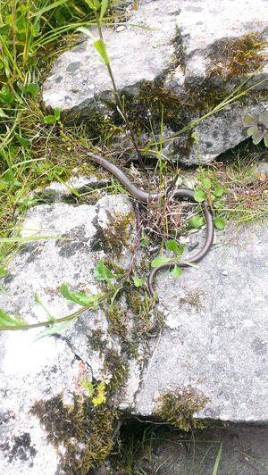 Secret Garden Snake Fearlessness PreciousMoments Garden