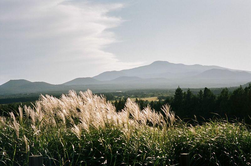Je-ju island, hanla M.T Filmcamera Filmisnotdead Film Photography Film Mountain Nature Mountain Range Field No People Agriculture Landscape