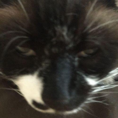 Cat Cat Close Up Cat Nose Bedroom Eyes Cat Eyes Animal Animal Head  Snuggle Buddy Fat Cat Cozy Cat Pwoottie Tat Nose