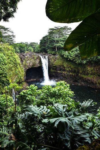 lush green Hawaii Rainbowfalls The Great Outdoors - 2018 EyeEm Awards Tree Water Motion Waterfall Spraying Sky Flowing Water Flowing Falling Water Power In Nature Running Water Crashing Rushing Lush Foliage