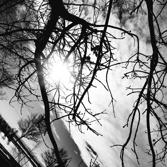 The Sun Peaking Throgh The Tree🌅🌳 Sunlight Nature Branch Tree Sunbeam Day Beauty In Nature Close-up Sky