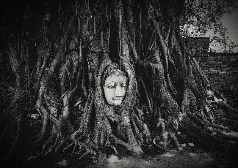 Believe Watmahathat Temple Thailand Nice Pic B&w Photography