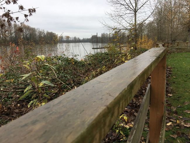 Walking the line on the banks of the overfull Willamette river River Park Newberg Willamette River  Willamette Valley Rainy Days Lonely Rain Splash