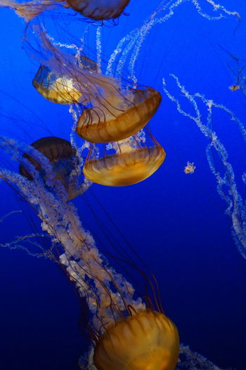 Aquarium Aquatic Beauty In Nature Blue Close-up Coral Day Fish Jellyfish Natural Pattern Nature No People Outdoors Reef Scenics School Of Fish Sea Sea Life Swimming Tranquil Scene Tranquility UnderSea Underwater Water Yellow