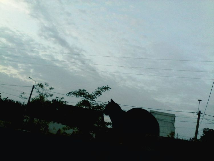 Morning Sky Clouded Tree Houses Cat Shadow Wolfzuachis Eyeem Market
