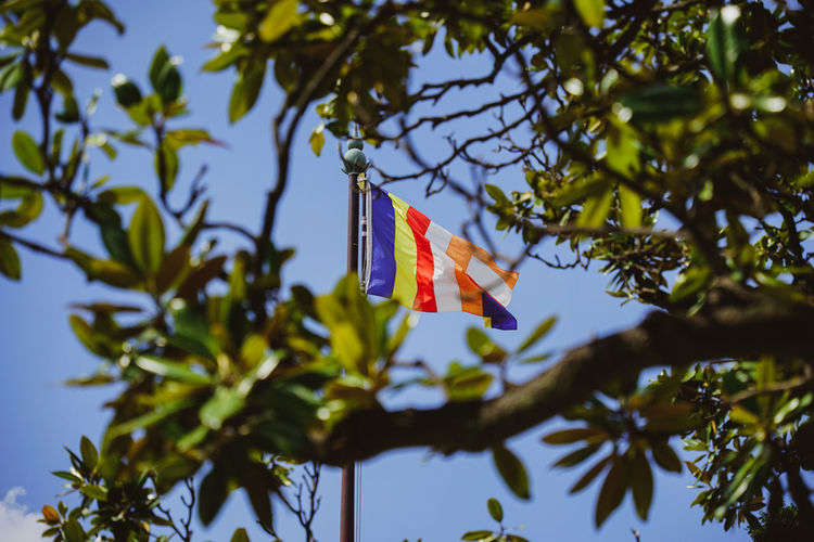 Low angle view of flags hanging on tree against sky