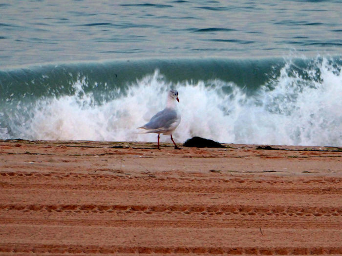 Mach mal nich so ne Welle😅 Seagull At The Beach Waves, Ocean, Nature Sea Wave For The Love To Life Enjoying Life Enjoying The View For My Friends 😍😘🎁 My Soul's Language Is📷 Tranquil Scene Beauty In Nature Thankful🦄 You Raise Me Up✨ Lucky Me🦄 Lovelovelovetheocean Good Night&sweetest Dreams 🦄 Been There. Lost In The Landscape An Eye For Travel Go Higher