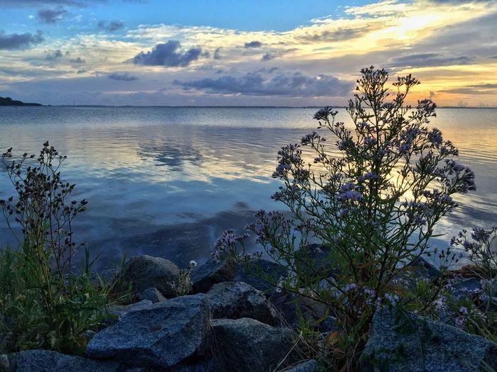 Idyllic moment before sunrise Water Coast Eastsea Ostsee Horizon Idyllic Rock - Object No People Beauty In Nature Sea Cloud - Sky Tranquil Scene Beach Sunrise Bluehour EyeEmNewHere