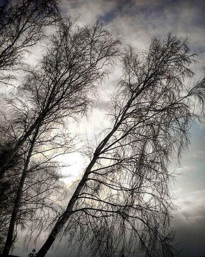 омск сибирь кчзо покрышкино выходной отдых Omsk Siberia Winter Holyday