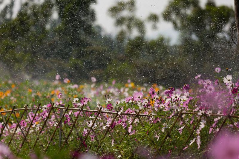 Wet Pink Flowering Plants Against Trees