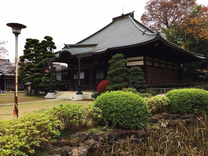 かつては蛙合戦の地として有名だった真覚寺 TktkTokyo Japanese Temple