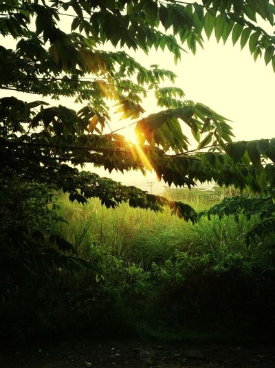 Senja Di Puncak Bukit