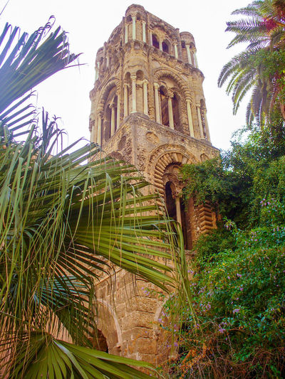 Architecture Plant Built Structure Building Exterior Sky Tree Nature History The Past Palm Tree Low Angle View Building Day No People Tropical Climate Religion Travel Destinations Outdoors Palermo Martorana Sicily Italy