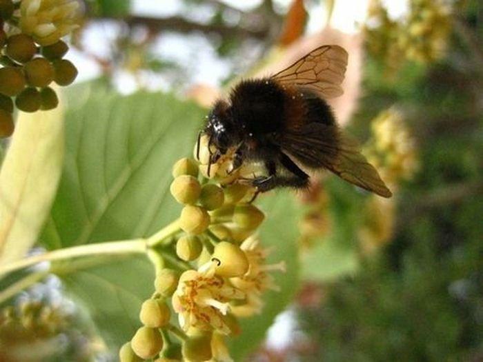 Le Jardin Du Luxembourg Paris, France  Nature Pollination Bees