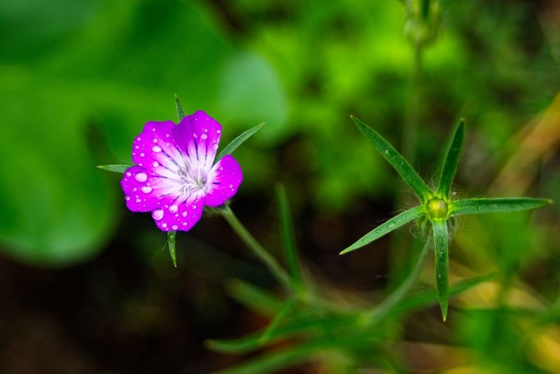 Flowering Plant Flower Plant Freshness Beauty In Nature Fragility Vulnerability  Close-up Growth Nature Flower Head