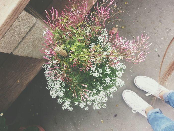 Pretty little flowers ?