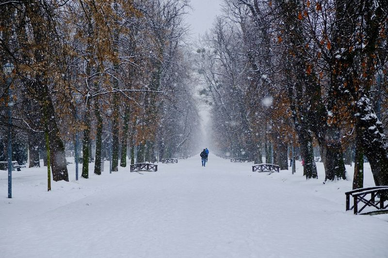 Walking in the park under a snowfall. EyeEm Best Shots Travel Destinations Snow Cold Temperature Winter Tree Plant Beauty In Nature Nature Winter Sport Unrecognizable Person Real People Snowing Land Leisure Activity Group Of People Outdoors Day People Environment Scenics - Nature