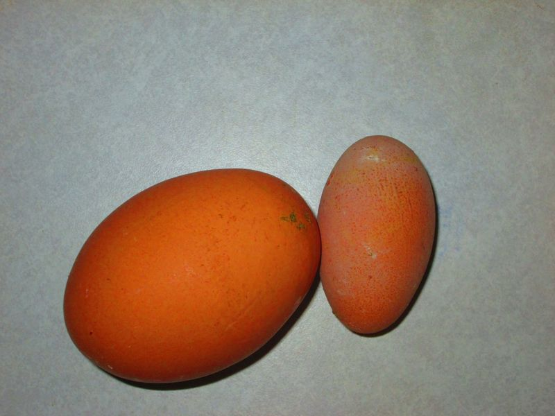 Better Together Chicken Eggs