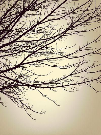 my tree. my