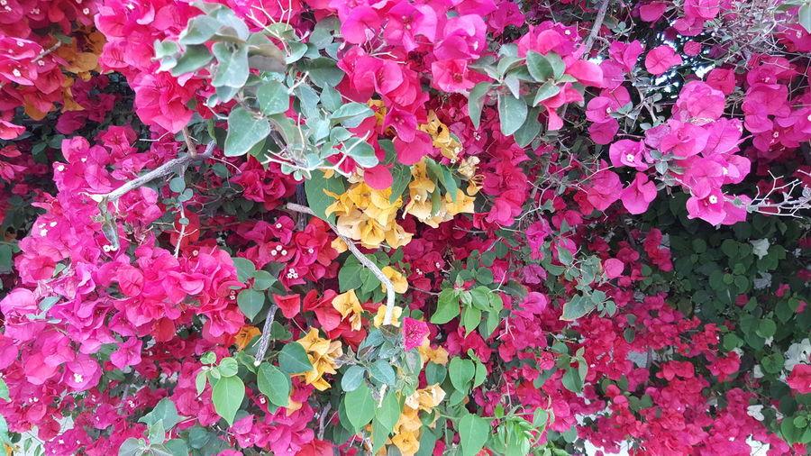 Colorful Likeforlike Photooftheday Beautiful