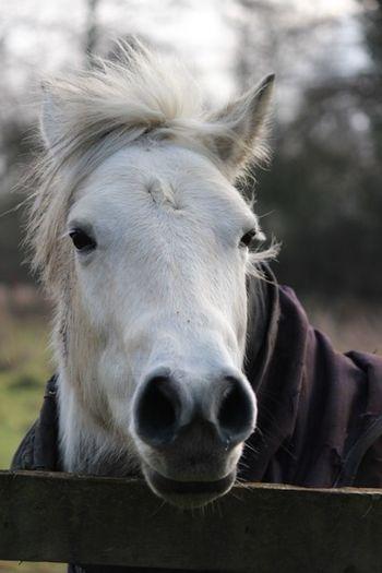 Animal Themes Livestock Mammal Animal Domestic Domestic Animals Pets Horse