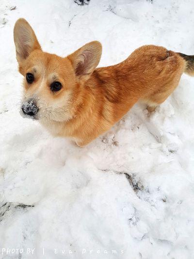 Close-up of dog on snow