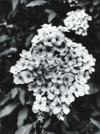 Blooming in gray Plant Flowering Plant Flower Vulnerability  Fragility Beauty In Nature Close-up Growth Flower Head Inflorescence Freshness Petal Nature No People Day Focus On Foreground Sunlight Outdoors Selective Focus White Color