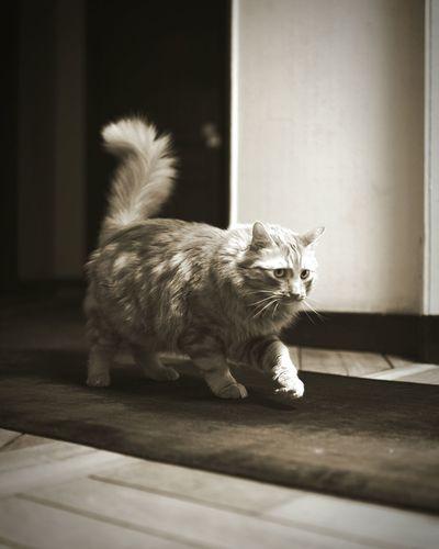 Sneaky cat Cat