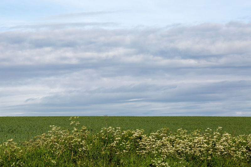 Cloudy Landscape Agriculture Beauty In Nature Cloud - Sky Countryside Cow Parsley Day Farm Field Grass Growth Landscape Nature No People Outdoors Plant Rural Scene Scenics Sky Sussex Tranquil Scene Tranquility Vegetation