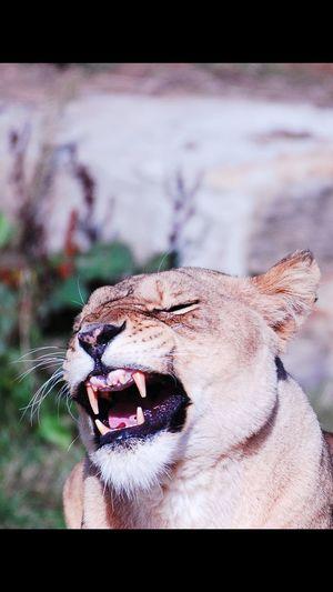 Yawn Yorkshire