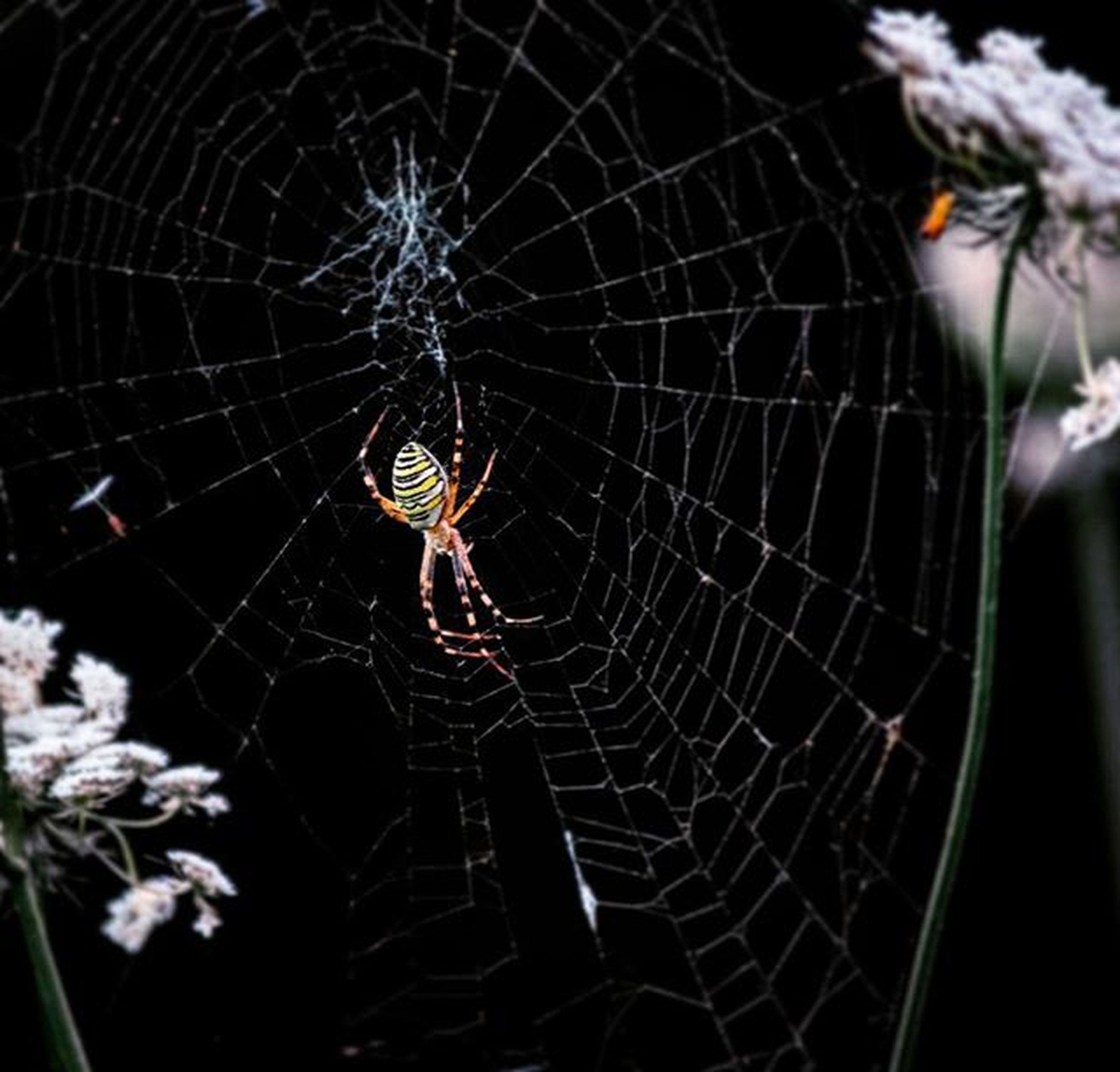 spider web, spider, close-up, fragility, focus on foreground, natural pattern, animal themes, insect, complexity, nature, one animal, outdoors, pattern, no people, web, day, animals in the wild, beauty in nature, wildlife