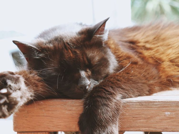 Lazy Day zzzz EyeEmNewHere Lazy Restdays Domestic Cat Pets Domestic Animals Animal Themes One Animal Mammal Relaxation Whisker
