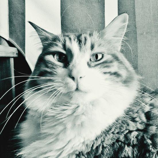 Winnie the fat cat.
