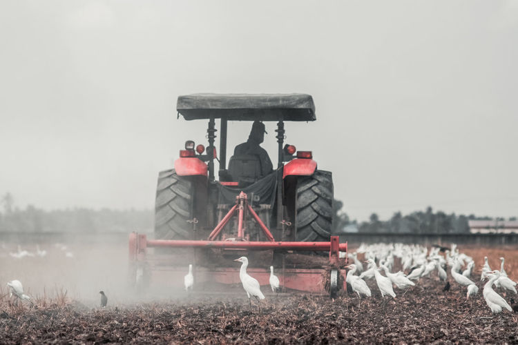 Man Driving Tractor On Field By Birds Against Sky