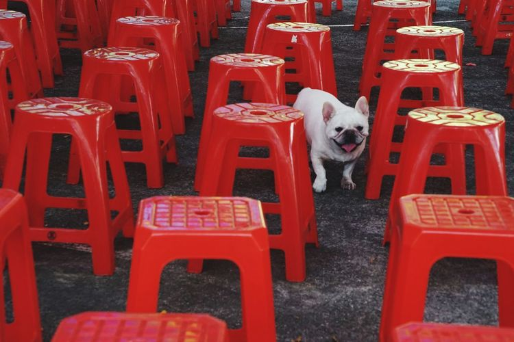 Chairs Doglover