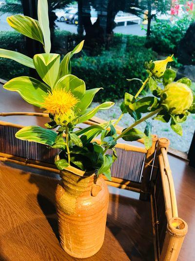 浜勝 Plant Potted