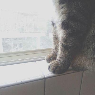 安定のモフモフ具合。 . 足の先までかわいいってズルイ...♡ . . 猫 ねこ 猫さんとの生活 にゃんだふるらいふ ねこ部 猫バカ ig_cat cat_stagramnekostagram kintarou 金太郎前足 もふもふworld_kawaii_cat animals_cuts キジトラ3歳