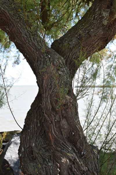Arbre Beauty In Nature Bois Exterieur Nature Nature No People Outdoors Timber Tree Tree Tree Trunk Tronc Trunk