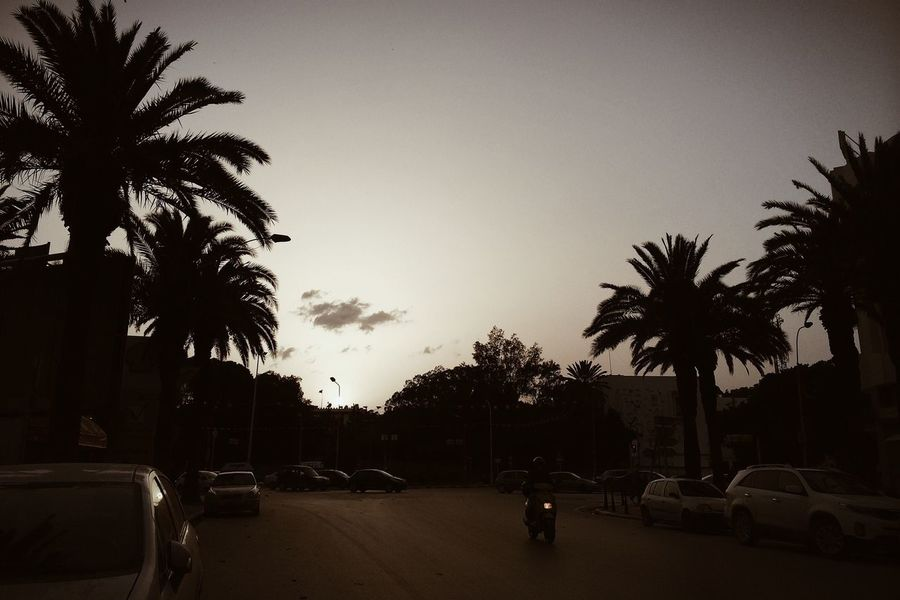 Sunset Streetphotography Palmtree Landscape_Collection