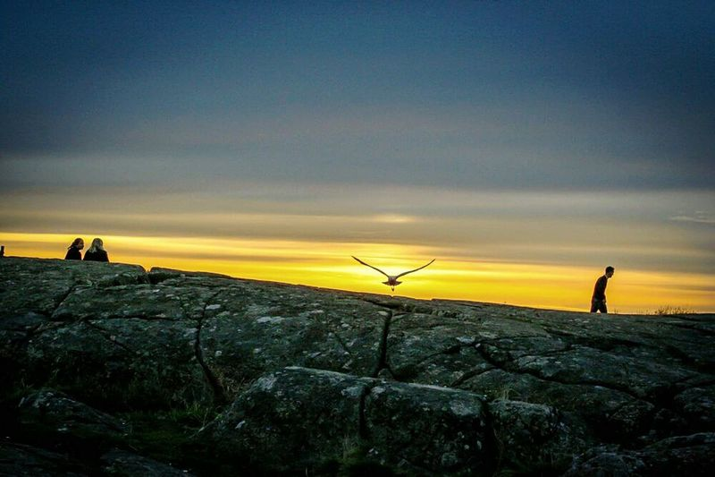 """""""Better to die fighting for freedom, than be a prisoner all the days of your life"""" /Bob Marley Hanging Out Bird Photography Birds_collection EyeEm Nature Lover Freedom Enjoying Fresh Air Sunset_collection Sunset Silhouettes Sunset Cheese! Loneliness Sunset Bird Free Time"""