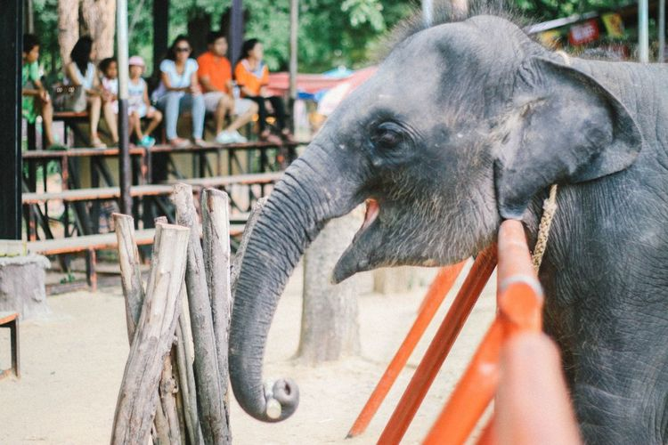 🐘 Taking Photos First Eyeem Photo