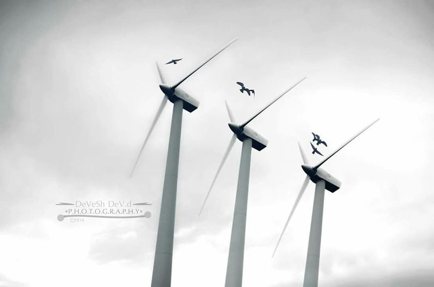 Free bird doesn't know what is dangerous, they just fly and might get through or die. Devesh Dev D... Freebird Life RISK Fly Die Windmill