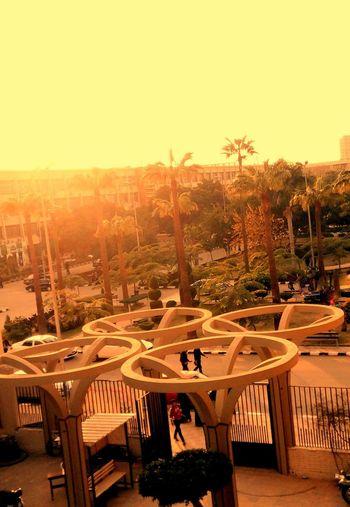 Egypt Engneering Green Mansoura Sunset University Winter